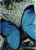Чехол для планшета Paint Case Butterfly Apple iPad Air 2 Blue